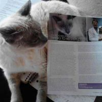 BooBoo the cat and magazine article